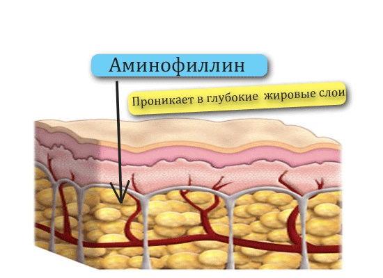 Аминофиллин попадает в жировую ткань