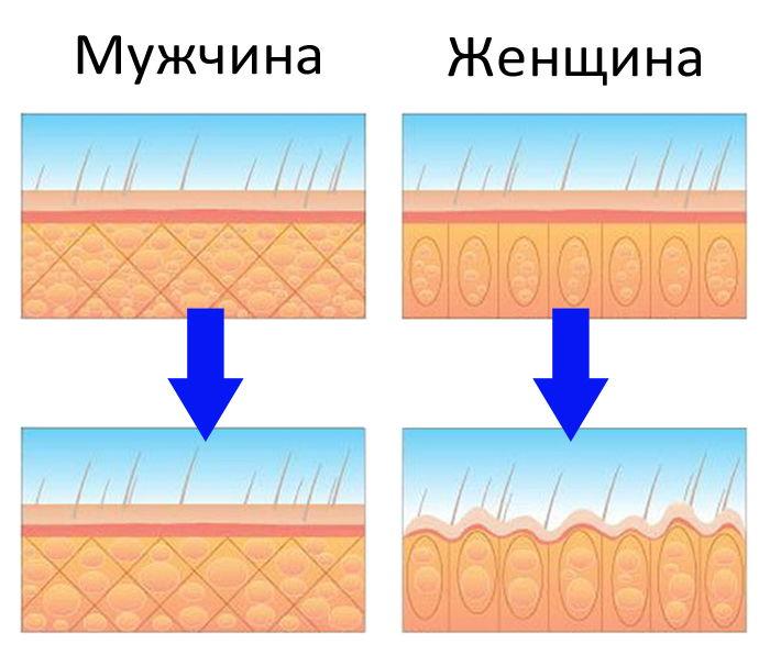 Жировые ткани мужчины и женщины